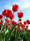 Consejos para aliviar las alergias de primavera