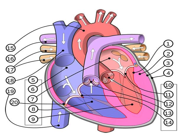Las complicaciones al sustituir la válvula aórtica