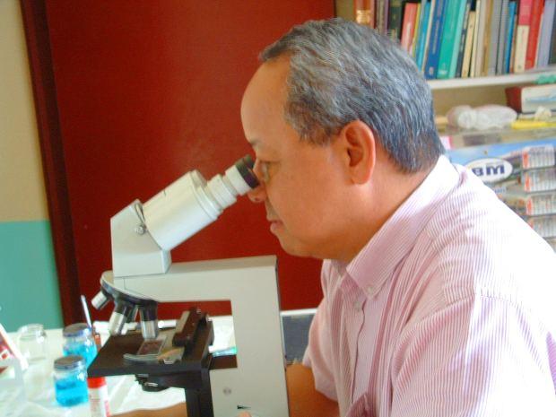 La terapia de células madre