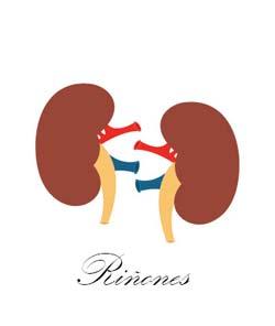 Infecciones del tracto urinario: Pielonefritis, Uretritis y Cistitis