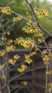 5 hierbas para eliminar de forma natural las hemorroides