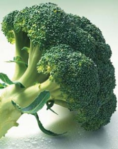 Combate singular entre dos vegetales