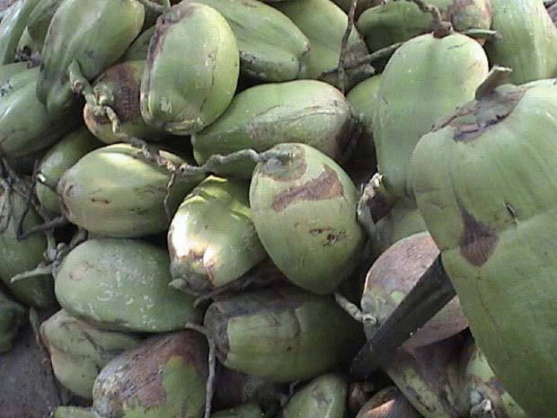 El aceite de coco un fabuloso regalo tropical - aceites vegetales