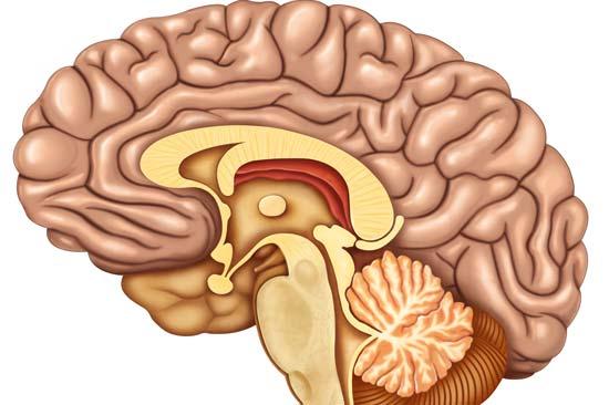 aumentar la capacidad intelectual fortalece la memoria