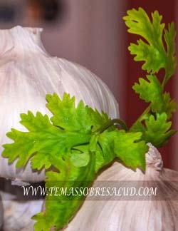 Las hojas y semillas de cilantro contienen aceites volátiles esenciales, tales como borneol, cineol, linalol, cimeno, terpineol, dipenteno, felandreno, pineno y terpinoleno.
