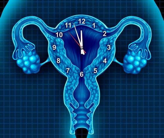 Los fibromas uterinos comunes son tumores no cancerosos que crecen en el útero.